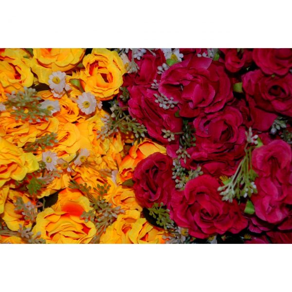 Cabbage Rose Assorted Colors